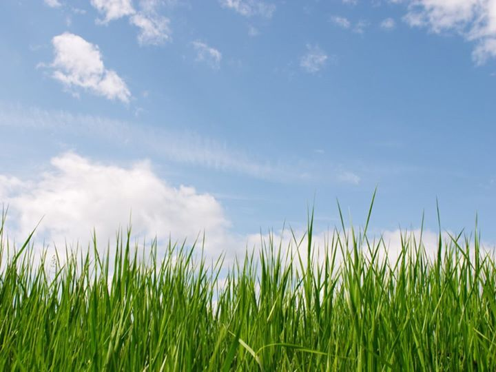 grass-and-sky